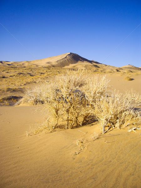 Sand dunes of the Mojave Desert Stock photo © emattil