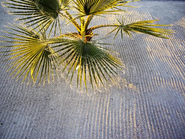 Licht schaduw lijnen schaduw zand palm Stockfoto © emattil