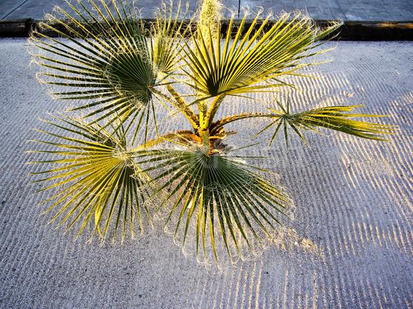 światło słoneczne pustyni dłoni liniowy piasku tekstury Zdjęcia stock © emattil