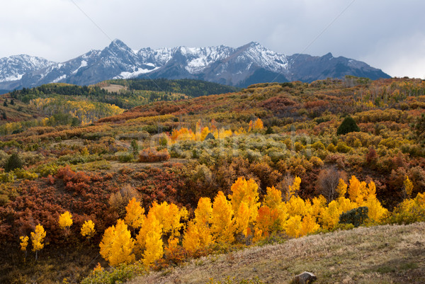 Last color of Fall in Colorado Mountains Stock photo © emattil
