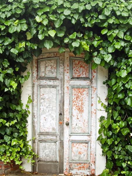 Kapualj borostyán ív viharvert levél festék Stock fotó © emattil