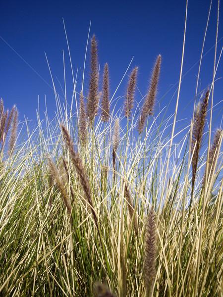 Wild woestijn blauwe hemel hemel groene zand Stockfoto © emattil