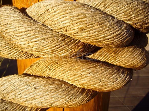Złoty liny poświata światło słoneczne tekstury drewna Zdjęcia stock © emattil