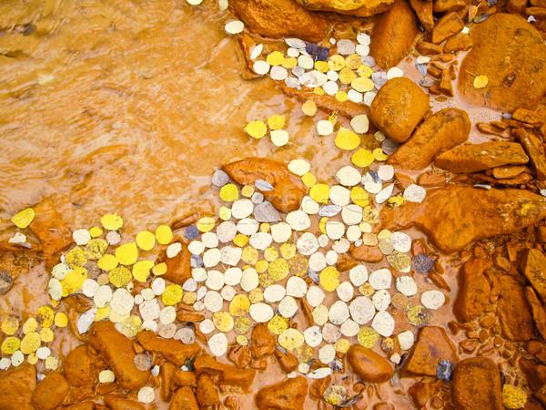 Photo stock: Jaune · laisse · radeau · boueux · rivière · automne