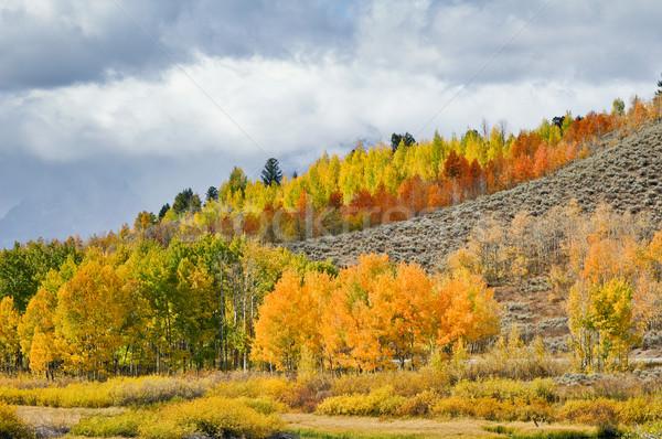Colorido ladera árboles árbol nubes Foto stock © emattil