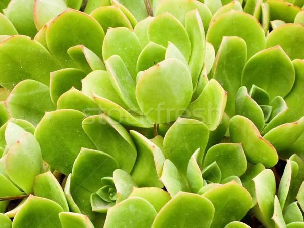 Parlak yeşil sahil bitkiler Kaliforniya ABD Stok fotoğraf © emattil