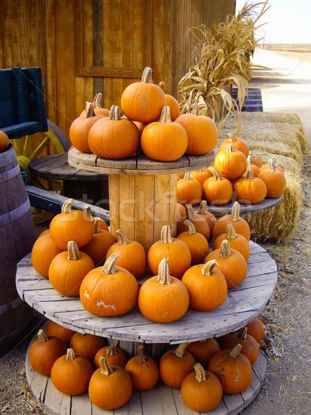 Zbiorów jasne pomarańczowy owoców jesienią Zdjęcia stock © emattil