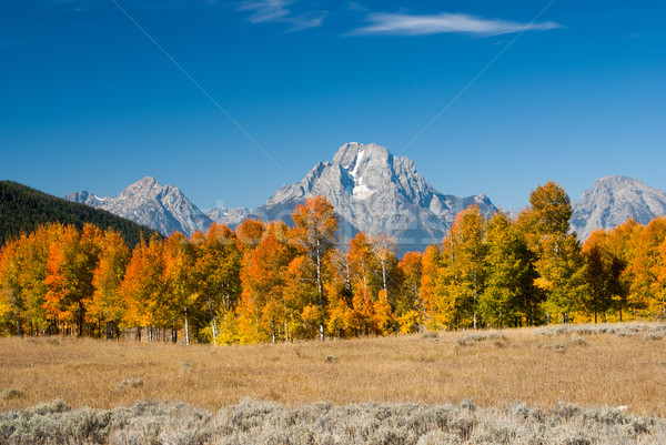 Grand tetons with Fall colors Stock photo © emattil