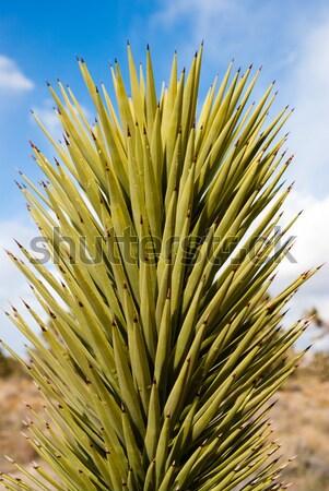 Kwiat pustyni charakter zielone piasku pozostawia Zdjęcia stock © emattil