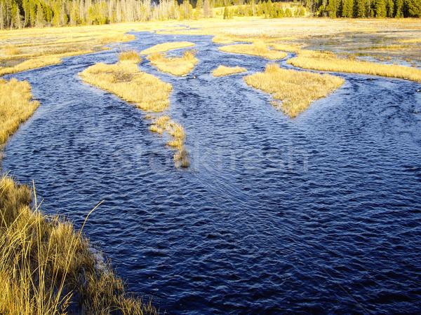 Watery Marsh Stock photo © emattil