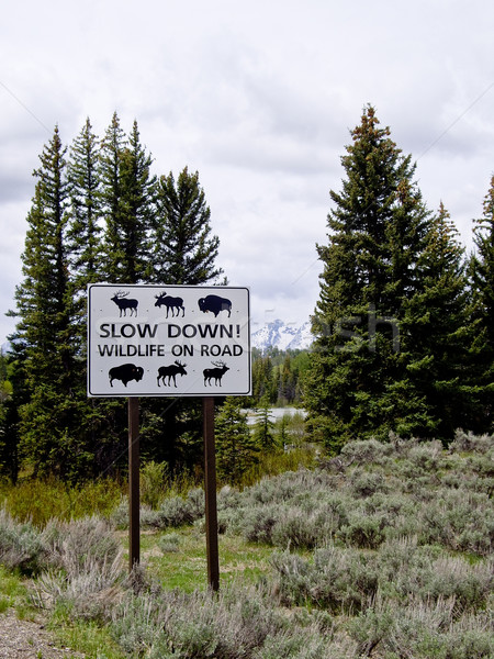 Traffic sign warning of wildlife  Stock photo © emattil