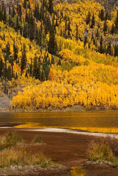 Golden Autumn Scenic Stock photo © emattil