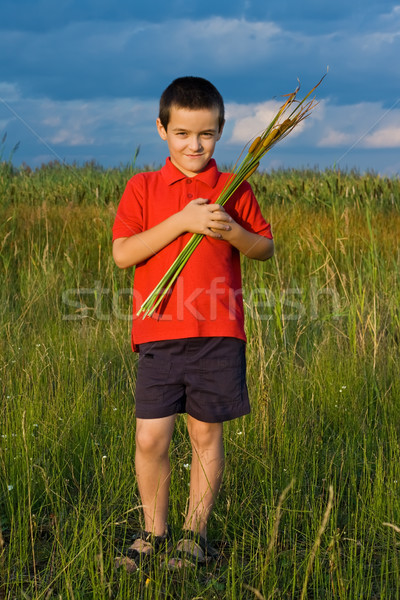 Boy holding reeds Stock photo © emese73
