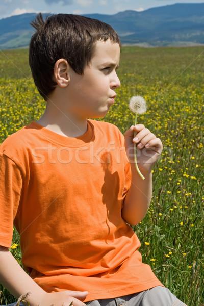 Garçon pissenlit peu prairie printemps Photo stock © emese73