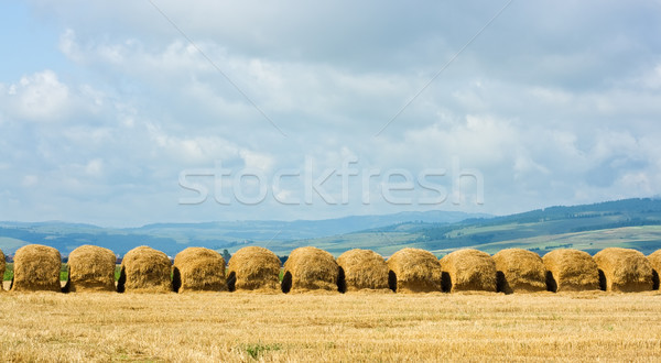 Straw stacks on the meadow Stock photo © emese73