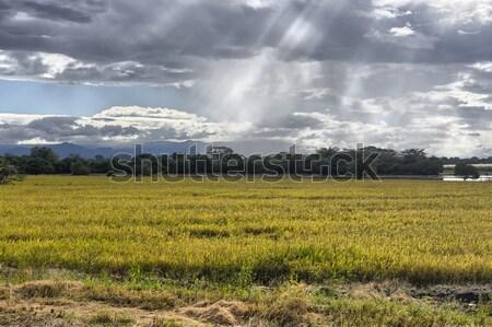 Amazing beams of sunlight on crops Stock photo © emiddelkoop