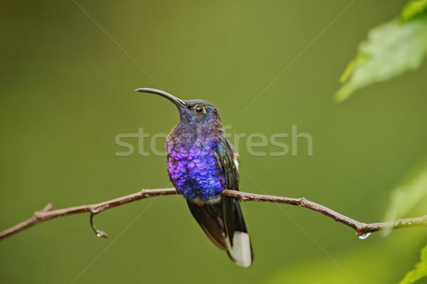 Hummingbird водопада садов Коста-Рика Сток-фото © emiddelkoop
