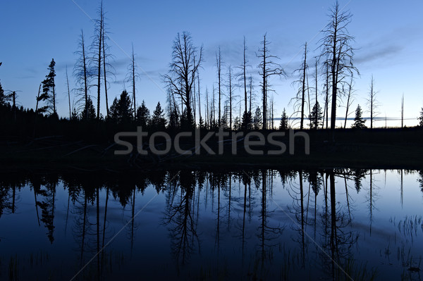 Small pond and tree silhouette Stock photo © emiddelkoop