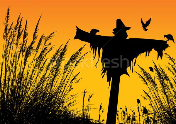 Madárijesztő természet levél nyár farm napfelkelte Stock fotó © emirsimsek