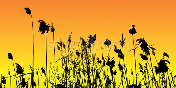 Vektor sziluett háttér tó folyó növény Stock fotó © emirsimsek