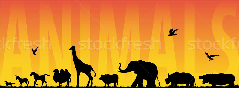 Animals Stock photo © emirsimsek