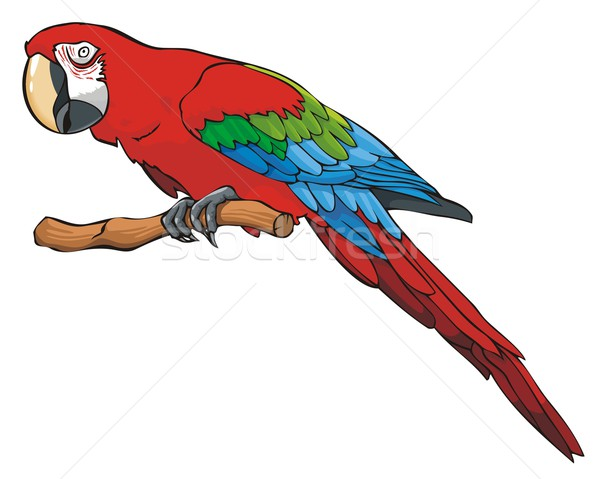 Bright colored parrot Stock photo © ensiferrum