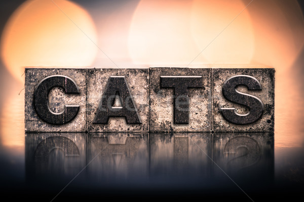Cat Concept Vintage Letterpress Type Stock photo © enterlinedesign
