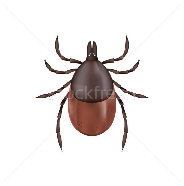 Deer Tick Isolated on White Illustration Stock photo © enterlinedesign
