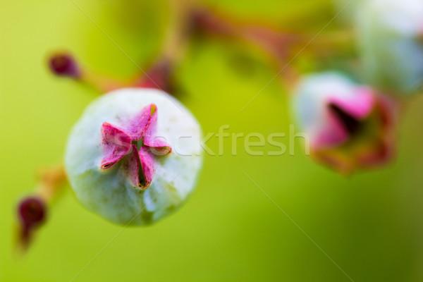 Mirtilos flor abstrato folha folhas Foto stock © enterlinedesign