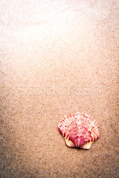 Coloré rose shell sable plage mer Photo stock © enterlinedesign