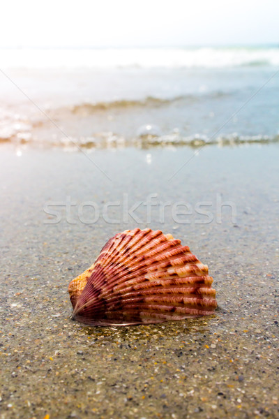 Renkli kabuk kum dalgalar plaj pembe Stok fotoğraf © enterlinedesign