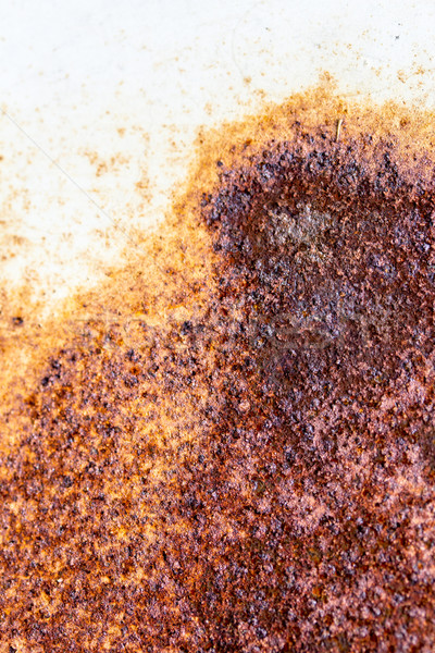 Enferrujado metal enferrujado resistiu folha abstrato Foto stock © enterlinedesign