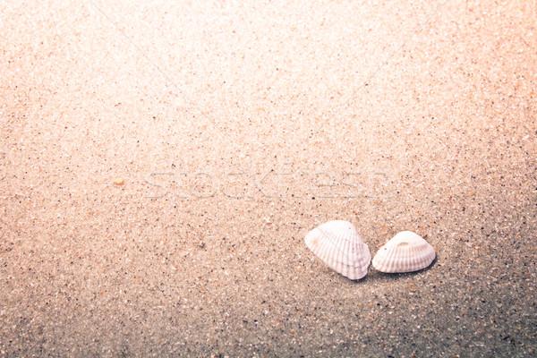 красочный снарядов песок пляж морем Сток-фото © enterlinedesign