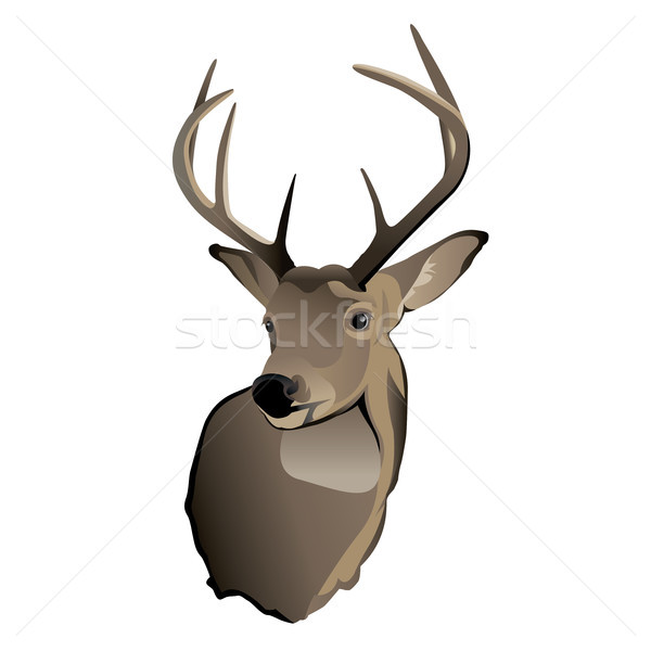 Trophy Whitetail Deer Buck Stock photo © enterlinedesign