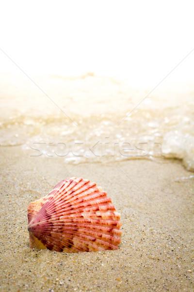 Renkli kabuk sörf plaj deniz dalgalar Stok fotoğraf © enterlinedesign