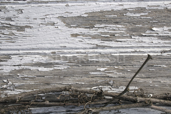 Peeling Paint on Weathered Wood and Grape Vine Background Stock photo © enterlinedesign