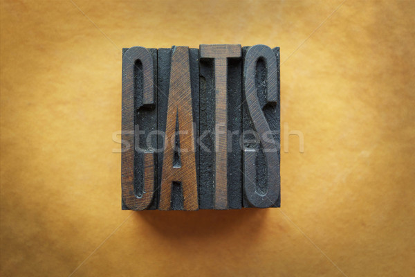 кошек слово написанный Vintage тип Сток-фото © enterlinedesign