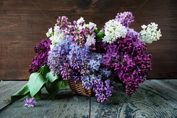 Lush multicolored bouquet of lilac Stock photo © Epitavi