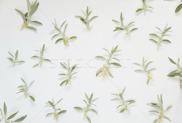 Green leaves on a white background Stock photo © Epitavi