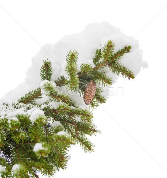 Sprig of fir with Stock photo © Epitavi