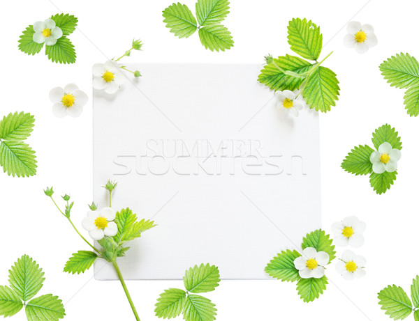 Frame with flowers and leaves of strawberry Stock photo © Epitavi