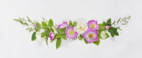装飾的な バラ 花 水平な レトロスタイル ストックフォト © Epitavi