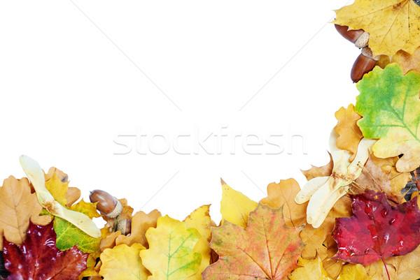 Autumn leaves on a white background Stock photo © Epitavi
