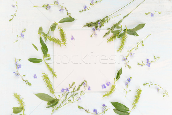 Frame with different herbs and flowers Stock photo © Epitavi