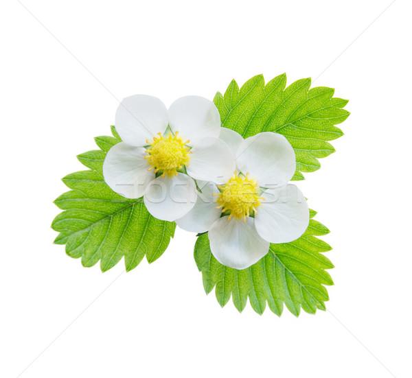 花 葉 2 白 イチゴ 緑の葉 ストックフォト © Epitavi