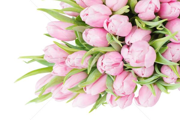 ピンク チューリップ 花 花束 新鮮な クローズアップ ストックフォト © Epitavi