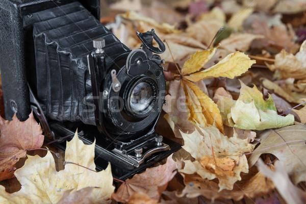 Vintage photo camera  in autumn park Stock photo © Epitavi