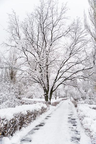 Meşe ağacı kış park yol yürüyüş geçmiş Stok fotoğraf © Epitavi