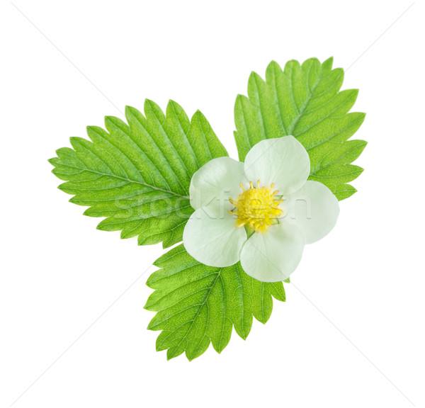 花 葉 白 イチゴ 緑の葉 孤立した ストックフォト © Epitavi