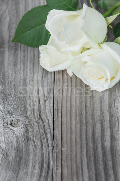 3  白 バラ 花 グレー 古い ストックフォト © Epitavi